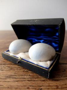 Egg Models with Case (A0817)