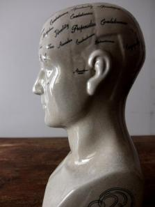 Phrenology Head (A0214)