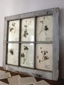 Herbarium with Frame (A1014)