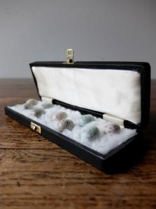Eggs Taxidermy with Case (A0318)
