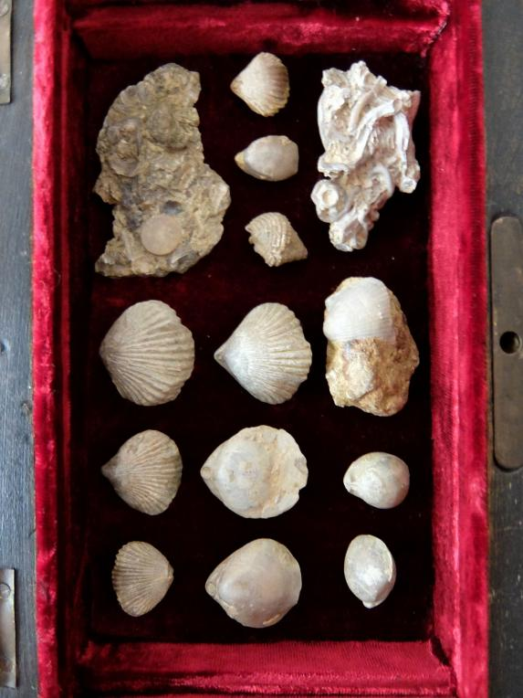 Fossil Collection with Box (A0320)