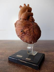 Anatomical Model 【Heart】 (A0420)