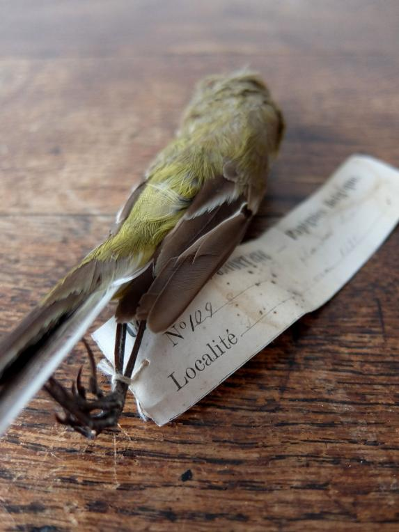 Educational Taxidermy 【Bird】 (A0419-02)