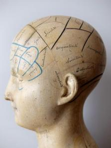 Phrenology Head (A0617)