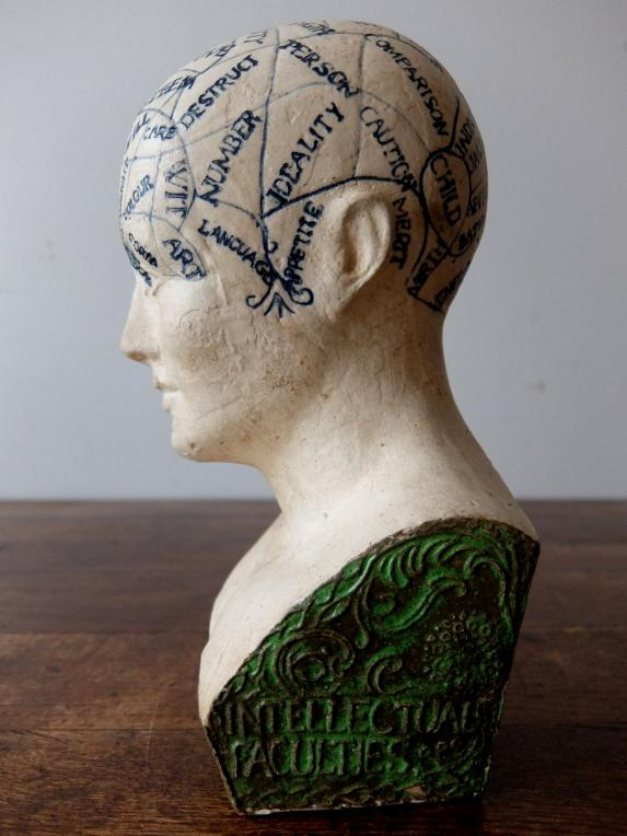 Phrenology Head (A0719)