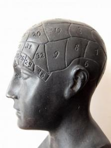 Phrenology Head (A0717)