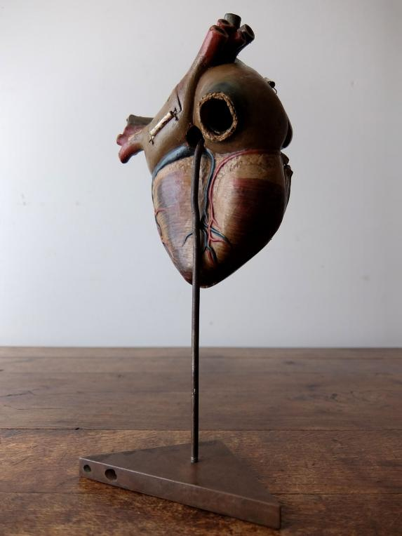 Anatomical Model 【Heart】 (A0517)