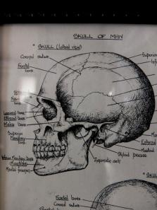Picture (Skull) (B0414)