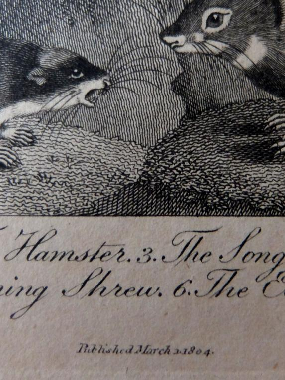 Copperplate Print (H0214)