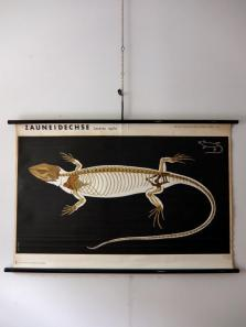 Hanging Scroll (Lizard) (A0915)