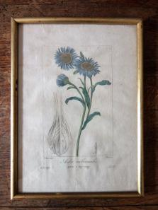 Copperplate Print (Botanical) (A0915-04)