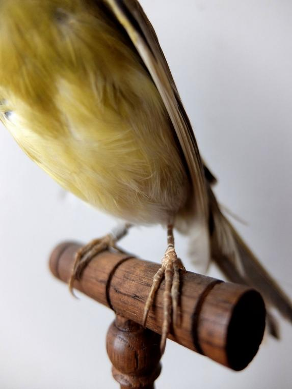 Taxidermy (Bird) (A1018-02)