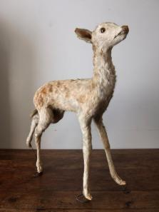 Taxidermy (Deer) (A1015)