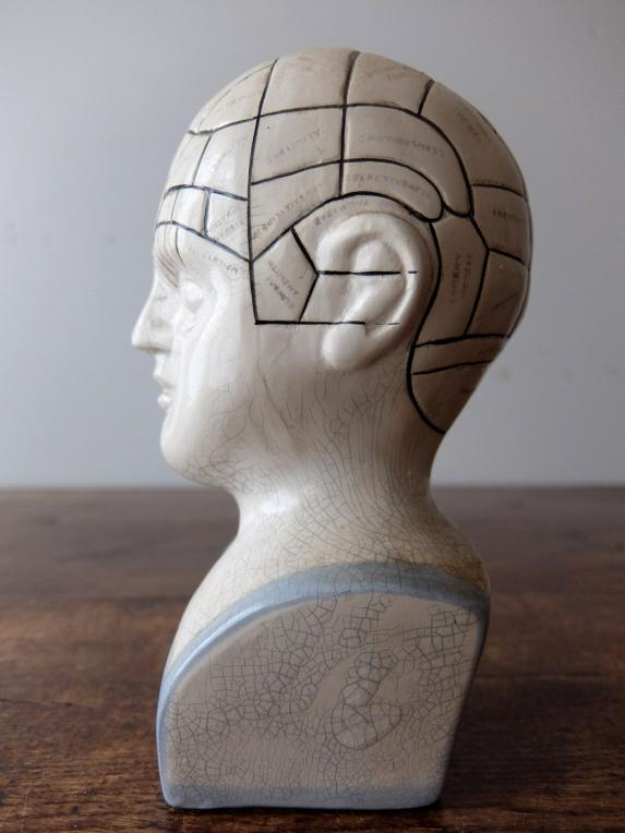 Phrenology Head (A1018)