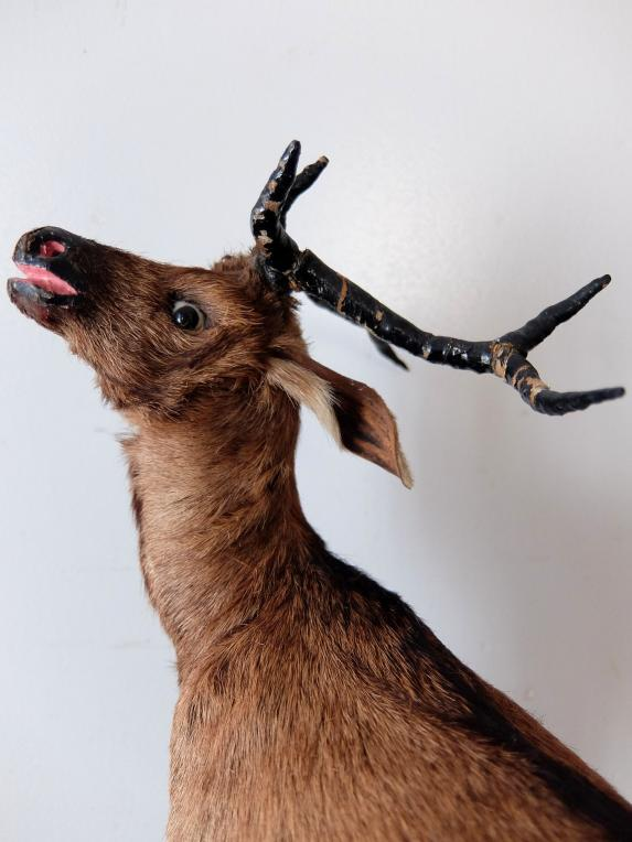 Animal Figure Model 【Deer】 (A1119)
